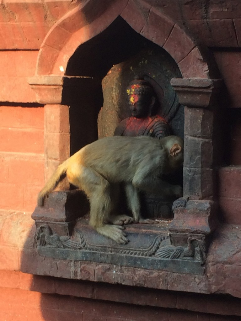 Swayambhunath temple monkey