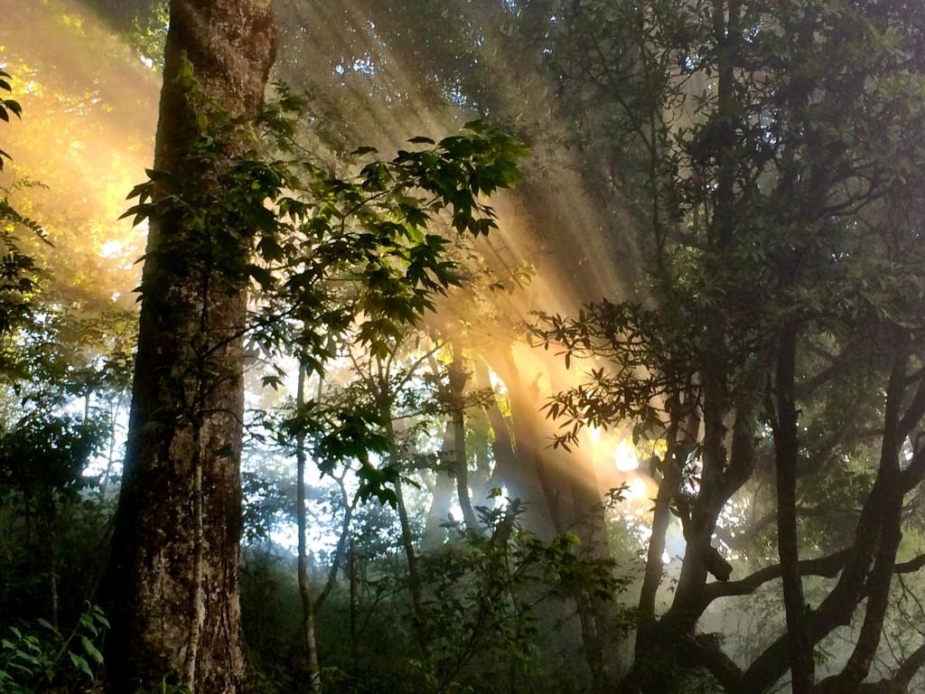 Sunlight in Darjeeling, India
